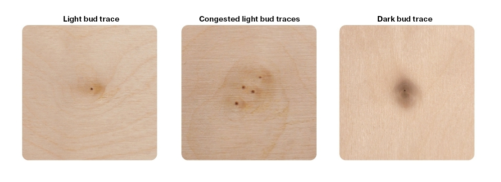 Wood structure defects (bud traces)